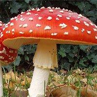 Tại sao hầu hết các loại nấm đều phát triển các chất gây ảo giác?