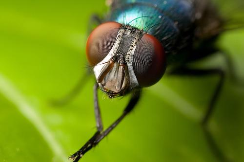Tại sao khó đập được ruồi?