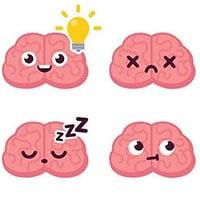 Tại sao lý thuyết 3 não lại ví não người với