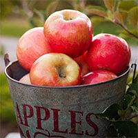Tại sao quả táo có thể để được 10 tháng mà không hỏng?