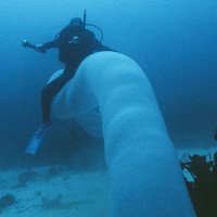 Tận mắt xem loài giun khổng lồ mà cá mập cũng phải gọi là