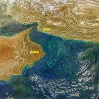 Tảo độc nở nộ trên biển Arab