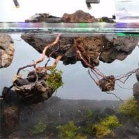 Thả một con kiến lửa vào bể kính, 2 năm sau người chủ nuôi thu về cả một đế chế hoành tráng khó tin