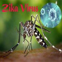 Thắc mắc phổ biến khi virus Zika lan rộng ở Sài Gòn