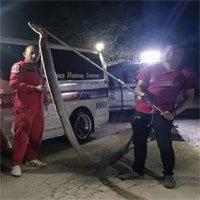 Thái Lan: Kinh hãi hổ mang chúa khổng lồ 5 mét mò vào nhà dân