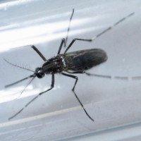 Thai phụ Malaysia đầu tiên nhiễm virus Zika
