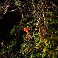 Thảm nấm đa sắc nở rộ trong rừng Đà Lạt