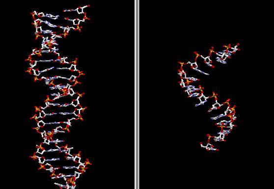 """""""Thần dược"""" từ ARN can thiệp"""