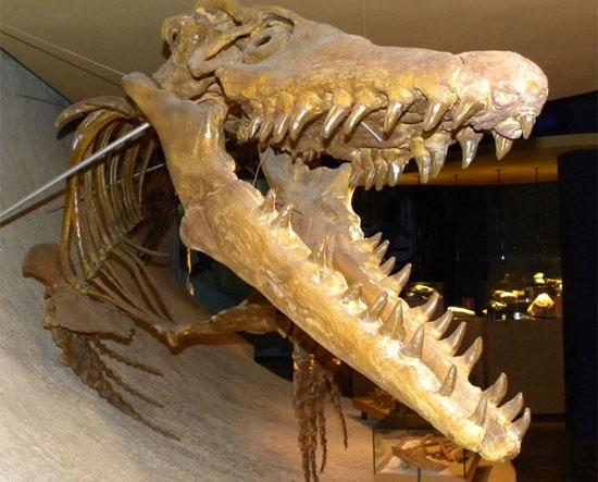 Thằn lằn biển Mosasaur từng thống trị đại dương