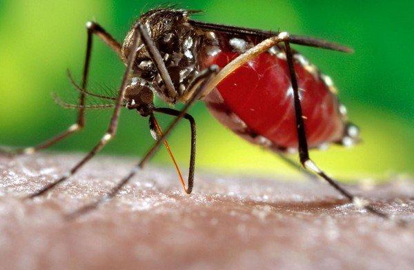 Thay đổi giới tính của muỗi