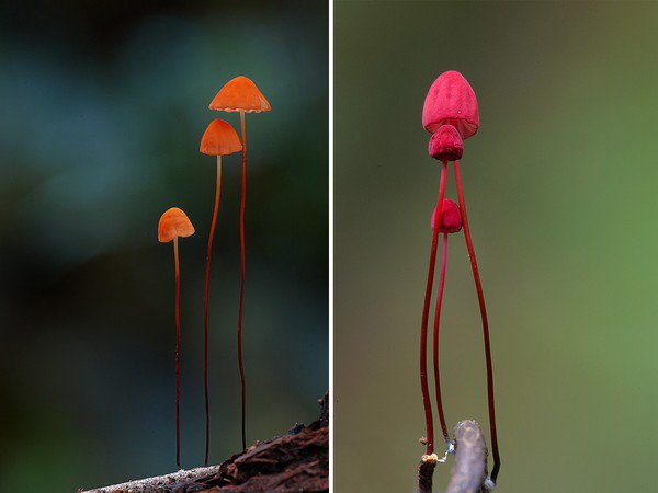 Thế giới kỳ diệu của các loài nấm khi chụp cận cảnh