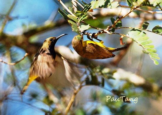 Thế giới nỗ lực bảo vệ chim sẻ