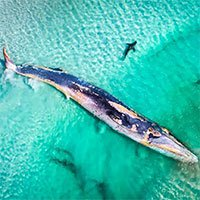 Thiên nhiên dữ dội và êm đềm trong cuộc thi nhiếp ảnh Úc