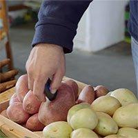 """Thiết bị cầm tay giúp """"giải mã"""" chất lượng thực phẩm trong nháy mắt"""