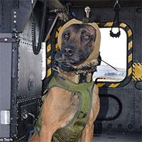 Thiết bị chống ồn cho chó nghiệp vụ của quân đội Mỹ