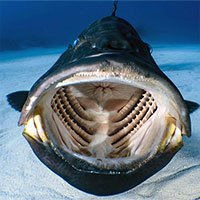 Thợ lặn chộp được khoảnh khắc bên trong miệng một con cá lúc đang bơi