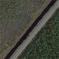 Thứ gì đó đang giết chết cây cối, biến những khu rừng ở bờ đông nước Mỹ thành