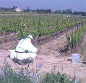 Thuốc diệt cỏ làm thay đổi hệ sinh thái toàn cầu
