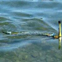 Thụy Sỹ phát triển thành công robot lươn phát hiện ô nhiễm trong nước