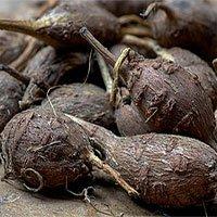 Tiềm năng trở thành siêu thực phẩm của đậu khoai tây