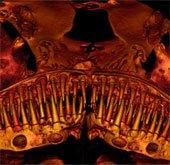 Tìm hiểu loài cá hàm đầy răng nhọn bí ẩn