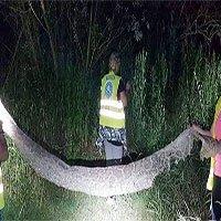 Tìm kiếm trăn mốc dài gần 5 mét ở bờ sông Ba Lan