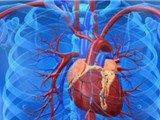 Tìm ra cách tái sinh số lượng tế bào cơ tim