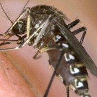 Tìm ra khắc tinh lớn nhất của muỗi, khiến chúng