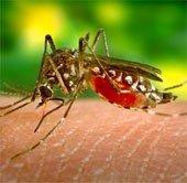 Tìm ra phương pháp mới để kiểm soát muỗi