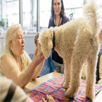 Tìm ra phương pháp ngăn bệnh Alzheimer phát triển ở động vật