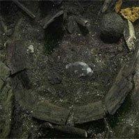 Tìm thấy cá tầm dài 2m trên tàu đắm từ thế kỷ 15