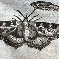 Tìm thấy cánh bướm ép trong sách nguyên vẹn 400 năm