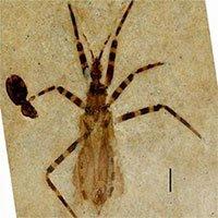 Tìm thấy hóa thạch bọ sát thủ 50 triệu năm tuổi