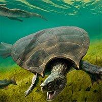 Tìm thấy hoá thạch của rùa khổng lồ ăn thịt rắn ở Nam Mỹ