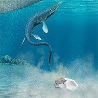 Tìm thấy hóa thạch trứng bò sát lớn nhất thế giới
