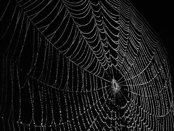 Tìm thấy mạng nhện đột biến vì nhiễm phóng xạ