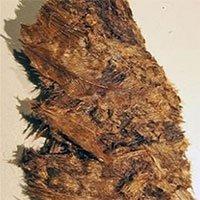 Tìm thấy mộ chiến binh thời Đồ Sắt chứa đệm lông vũ
