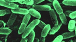 Tìm thấy vi khuẩn đường ruột có lợi trong trứng gà