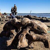 Tìm thấy xương voi ma mút dính mô mềm 10.000 năm tuổi ở Bắc Cực