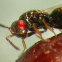 Tin được không: Khoa học tạo ra những con ong đến từ