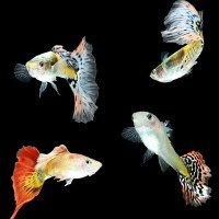 Tính cách phức tạp của loài cá