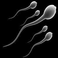 Tinh trùng sẽ không chạm được vào trứng khi con người sử dụng loại hợp chất này