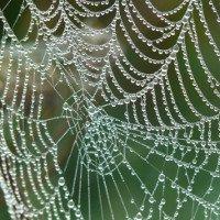 Tơ nhện nhân tạo thế hệ mới: bền hơn thép và 98% làm từ nước