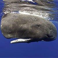Top 6 loài cá to lớn nhất đại dương