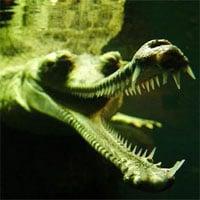 Top 8 loài vật có vẻ ngoài
