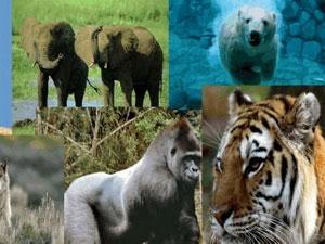 Trái Đất đối mặt nguy cơ đại tuyệt chủng lần 6
