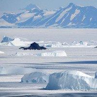 Trái Đất nóng lên khiến Nam Cực ngày càng phủ nhiều màu xanh hơn