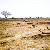 Trái đất sẽ có thêm rất nhiều sa mạc Sahara nếu xu hướng này tiếp tục xảy ra