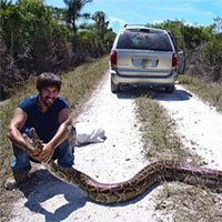 Trăn khổng lồ xâm chiếm Florida: Chính quyền