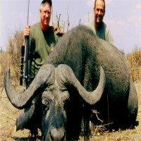 Trâu rừng húc chết thợ săn để trả thù cho đồng loại
